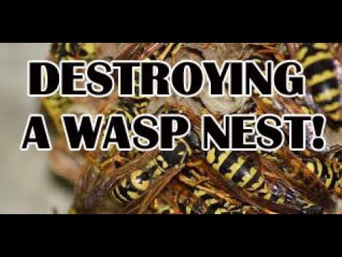 Destroying a wasp nest!
