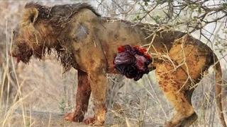 ワトグチの肉屋、ライオン、チーター、ヒョウとハイエナ! ワトグチの肉...
