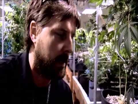 Spiegel tv cannabis high live in colorado youtube for Spiegel tv dokumentation