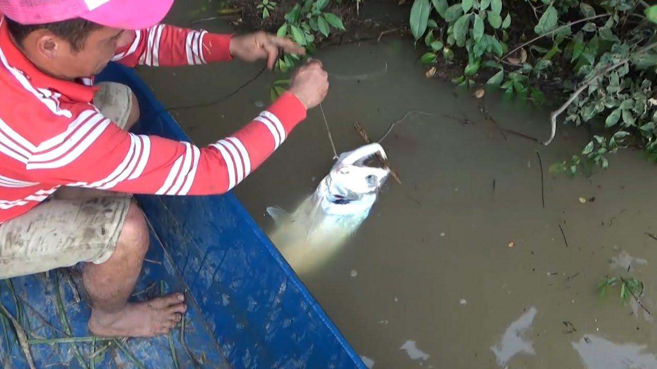 Técnica efectiva para pescar con carnada viva !