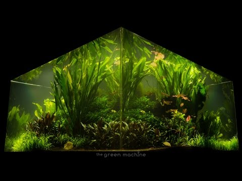nature's-chaos-transformed-into-a-jungle-aquascape-by-james-findley