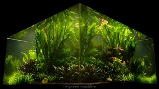 Gambar cover Nature's Chaos Transformed into a Jungle Aquascape by James Findley
