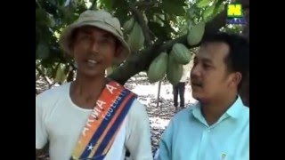 081233750366(Simp)Budidaya Kakao Unggul,Panduan Lengkap Budidaya Kakao