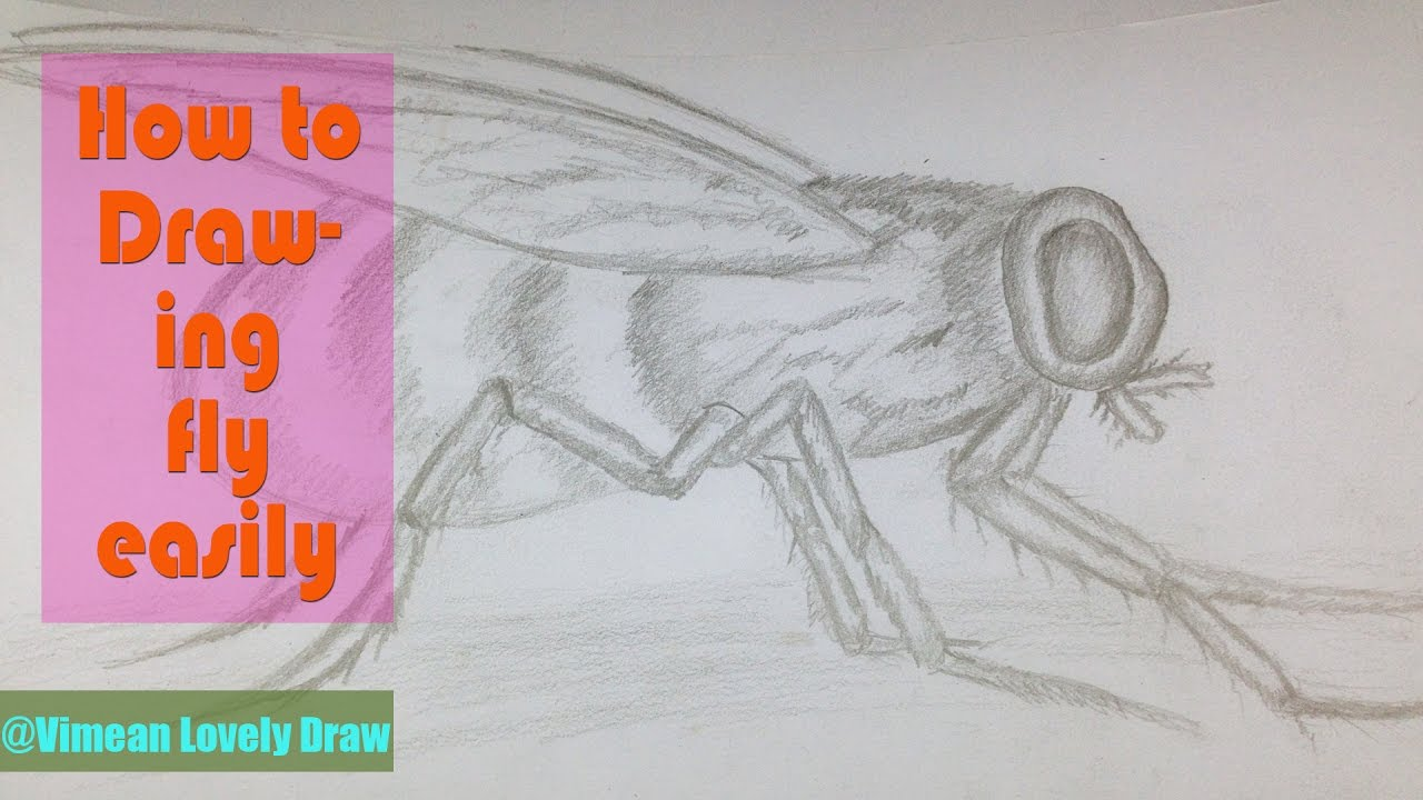 how to draw fly pet easily simple bird drawing for tutorial