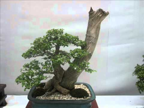 Davao Bonsai competition March 6-18, 2011.wmv