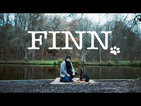 Finn   Britain's Bravest Dog