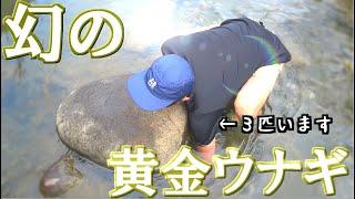 釣りよか史上最大の大うなぎを捕獲!天然の黄金ウナギ!