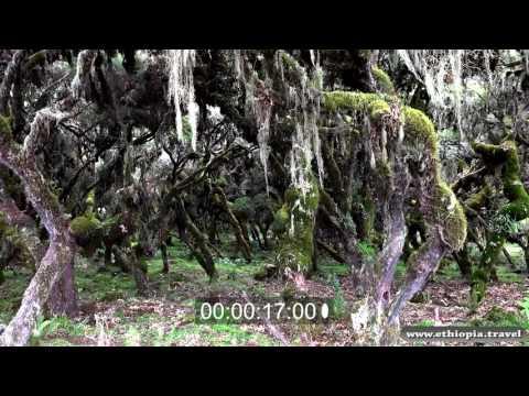 Ethiopia - Bale National Park Plateau (Part 5)
