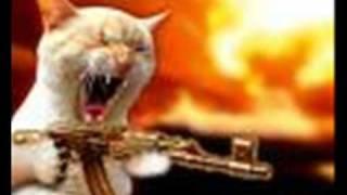 Stephen Lynch- Kill a Kitten