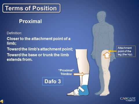 Anatomy Review: Terms of Position