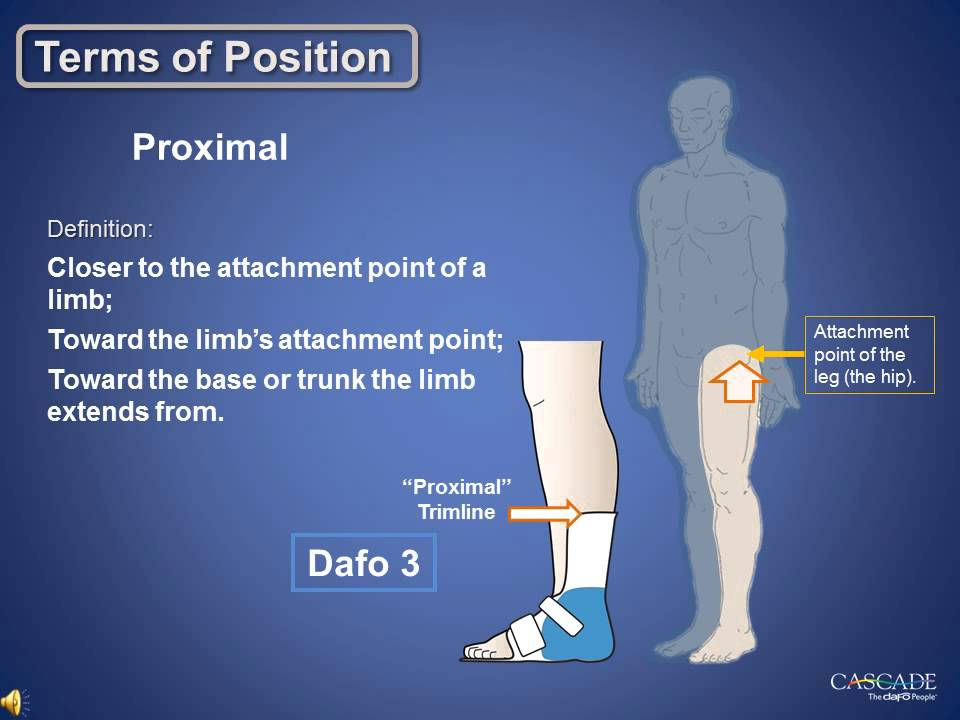 Anatomy Review Terms Of Position Cascade Dafo Youtube