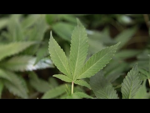 Legalize pot sales to those 18 and up: task force