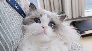 员工天天带宠物上班,老板不管反而支持,自己的猫也养在公司里