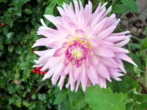 Flores de mi jardin con musica relajante