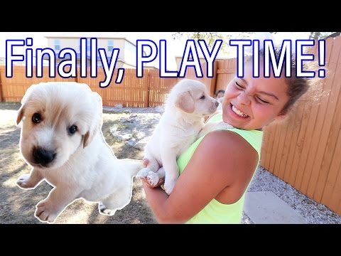 Rescue Pups FINALLY Play Again! | Teaching Kids about Fostering