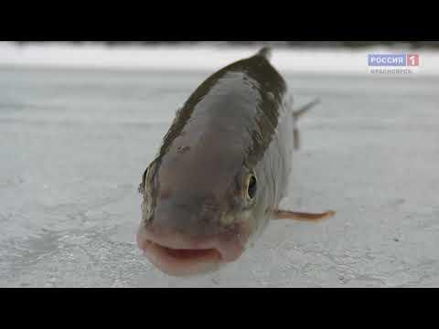 Охота на рыбалку.