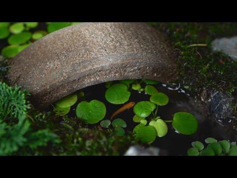 Making a Japanese garden【和風の箱庭を作る】