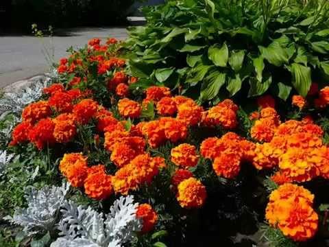 Осенние работы саду