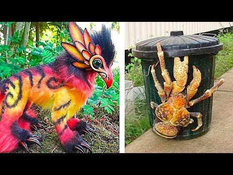 Вопрос: Какие животные на земле имеют самую необычную окраску?