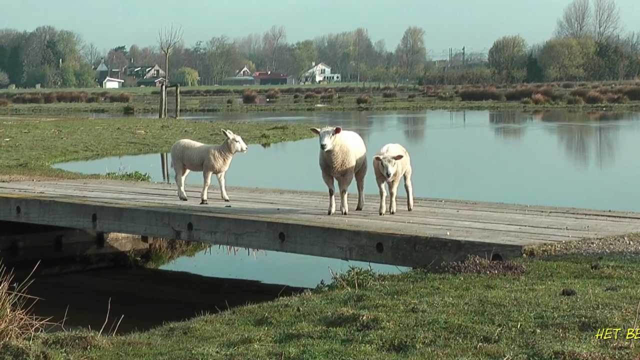 Polder Poelgeest HD 1080p Natural sounds!!