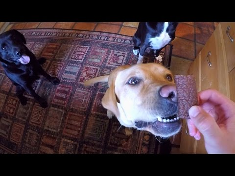 Dogs go Crazy for a Treat