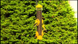Perky Pet® Select-a-finch Tube Feeder