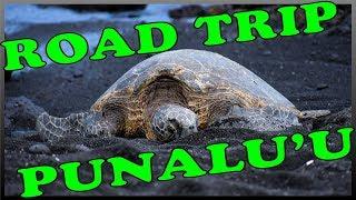 Hawaii Road Trip to Punalu'u Black Sand Beach to See the Green Sea Turtles