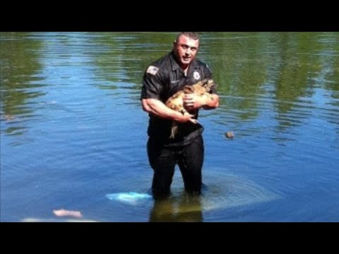 Good cops: Policeman saves chihuahua from drowning; NYPD officer saves choking woman - Compilation
