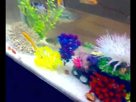 chines moulded aquarium