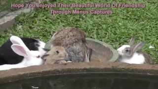 Farm Animals In Harmony - Rabbits & Ducks