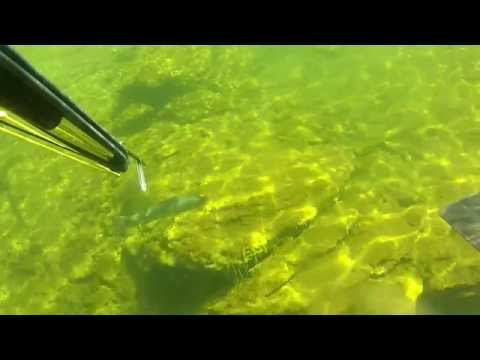 Spearfishing Lake Powell