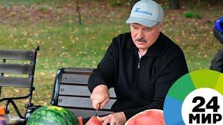 После работы на дачу: Лукашенко собрал «приличный» урожай картофеля и арбузов - МИР 24