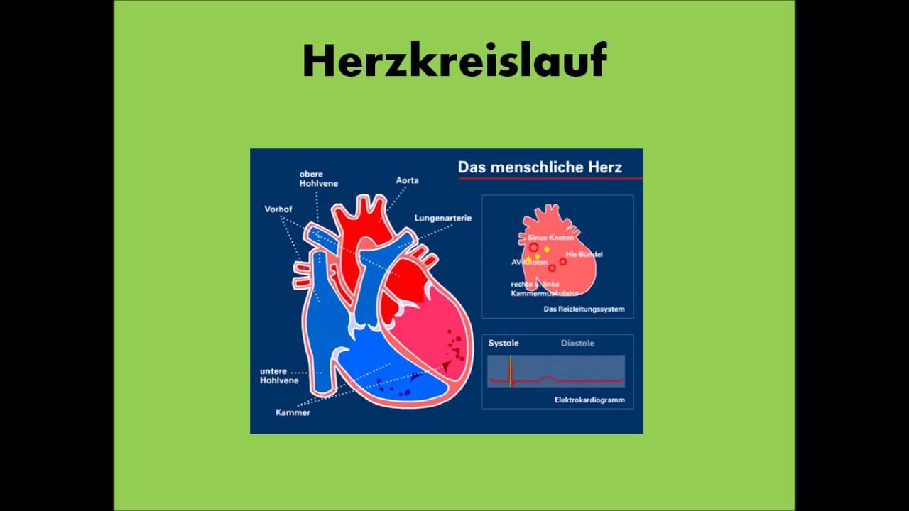 Aufbau und Funktion des Herzens - YouTube