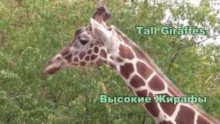 Английский язык - Видеословарь: Животные в зоопарке
