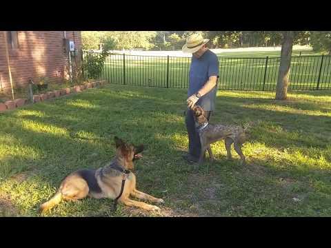 Orlando Dog Training - K9 Counselor