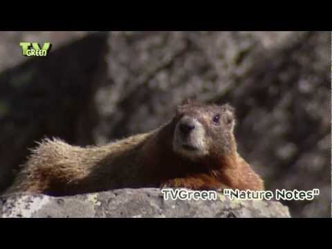 Wildlife at Yellowstone river & sheepeater cliffs