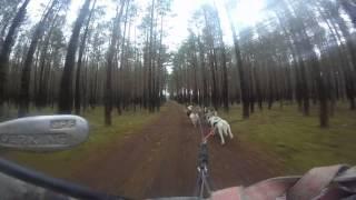 Gopro Movie Siberian Husky Training Part.1