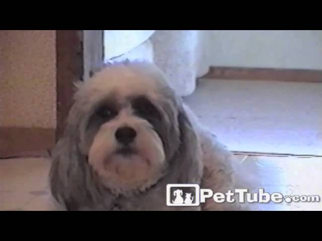 Gizmo Speaks Up- PetTube