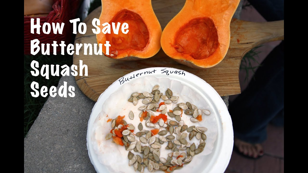 How To Save Ernut Squash Seeds You