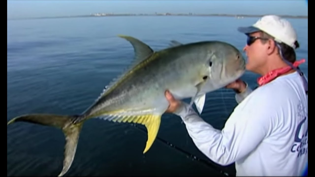 Ocean fishing for tarpon and jack crevalle on the space for What is a jack fish