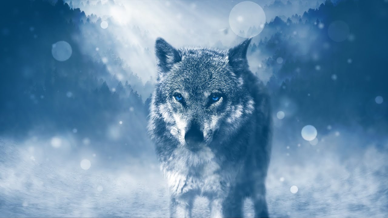 Best Nature Pictures Wolf