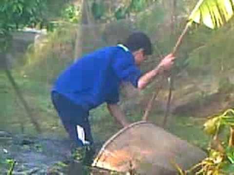 Cách bắt cá rô đồng.Đặng Lung