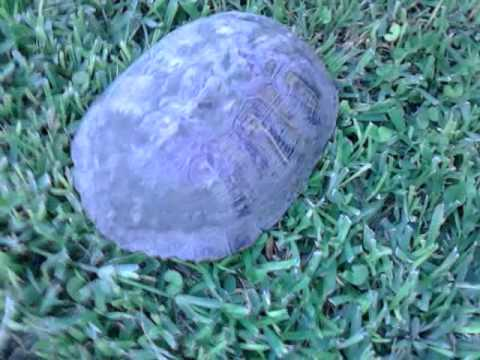 Squirtle in real life - YouTube