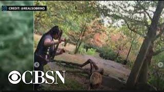 woman-video-bronx-zoo-lion-den-turns