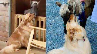 Dog Comforts Rescued Pony That Was Star...