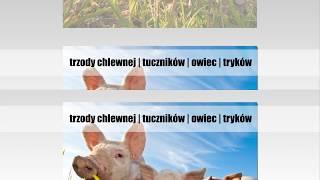 Rozbiórka mięsa wołowego Starowiskitki-Parcel Frączkiewicz Stanisław i Synowie