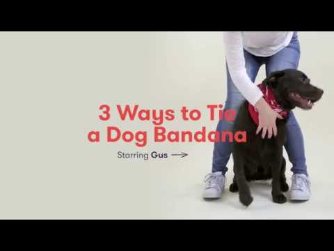 How To Make A Dog Tie Out