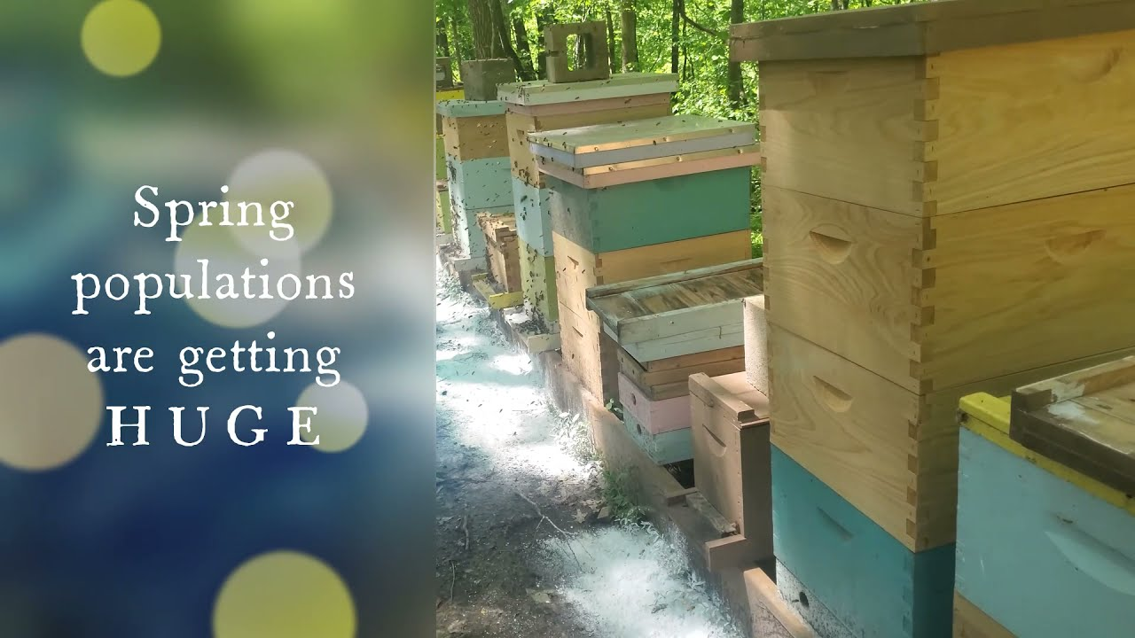 Busy bees in the apiary