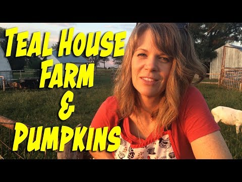 Teal House Farm & Pumpkin Update