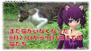 また猫がいなくなった!8月27日から9月1日までの猫たち【こみみ】 thumbnail